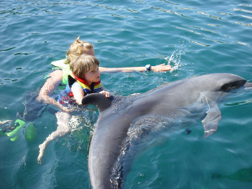Dolphin Therapy Family Nodinger