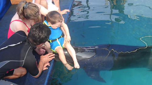Kevins Begegnung mit dem Delfin