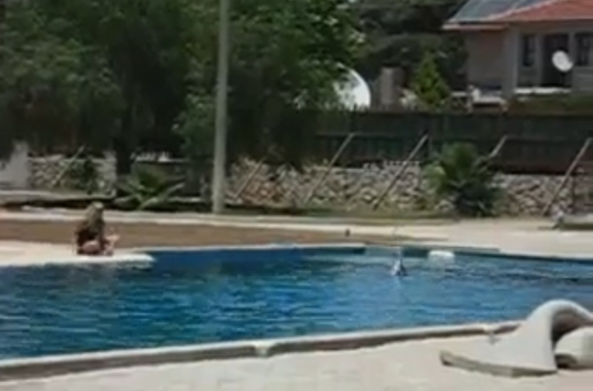 Delfine in einem kleinen Pool in Hisaronu bei Fethiye