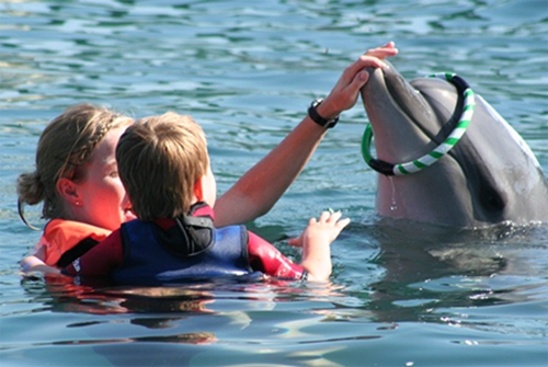 Therapy with dolphins of family Schürbusch