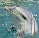 Delphintherapie von Jacqueline