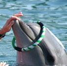 Delfintherapie bei Posttraumatischer Belastungsstörung (PTSD)