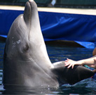 Dolphin Therapy: