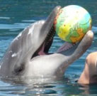 Dolphin Therapy in Marmaris of Nele