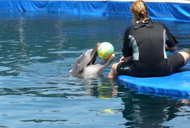 Neles Delphintherapiereise 2011