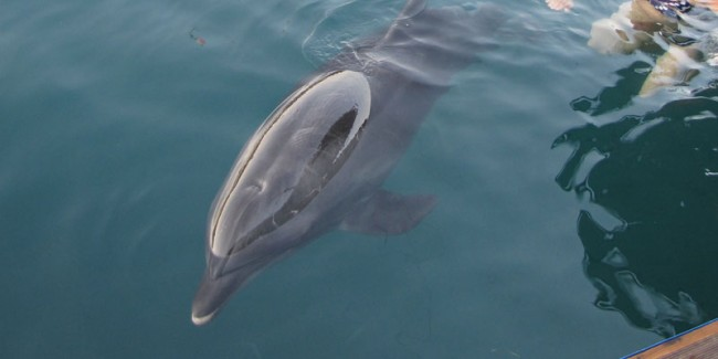 Dolphin Therapy Report from UK
