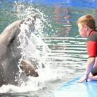 Тим надува свирката за обучение на делфини