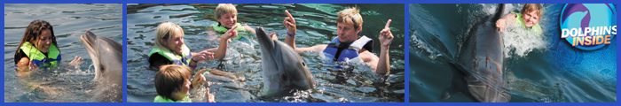 swim-with-dolphins-onmega-marmaris