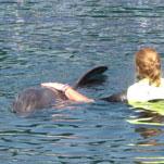 La terapia con i delfini promuove la lingua e la concentrazione di Sandra