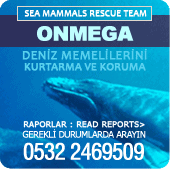 Bluewhalebanne.png