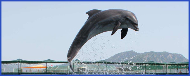 delfintherapie-bericht-vroni-03