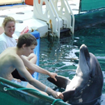 Successful dolphin therapy for Stefan