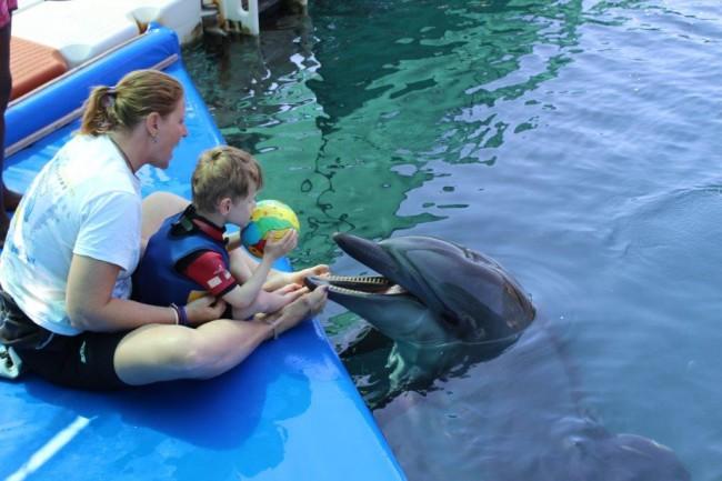 Luke Türkiye'de yunuslarla yüzüyor.