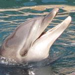 Mit den Delfinen schwimmen zu dürfen bedeutete mir sehr viel