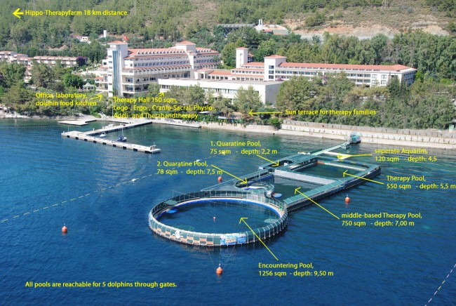 Dolphin therapy seawater pool in Marmaris