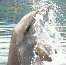 Phil´s 2. Reise zu den Delfinen