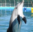 Bericht über das Delphintherapie Zentrum in Marmaris