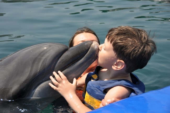 Perfectly prepared Dolphin Therapy for Samir