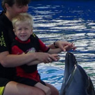 Niklas with the dolphins