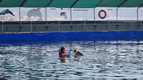 spielen-delfin