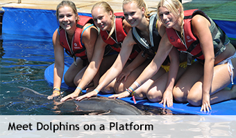 Meet_Dolphins_Platform