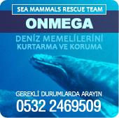 Meeressäuger Rettungsteam
