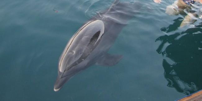 Delfintherapie-Bericht aus England