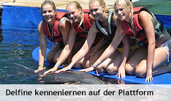 Delfine_kennenlernen_Plattform