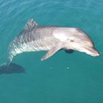 A delfinterápia fejleszti a koncentrációt és finommotorikus képességeket – Sophie története