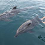 Jakub ist neugierig und lernt viel neues nach der Delfintherapie