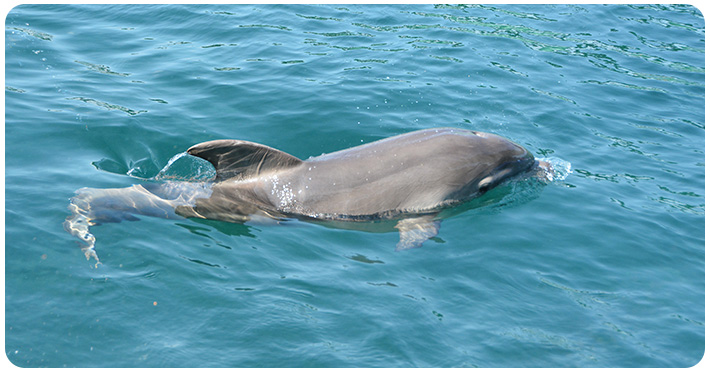 Die Geburt unseres kleinen Delfinmädchens Eva