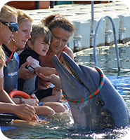 familiy is playing with a dolphin
